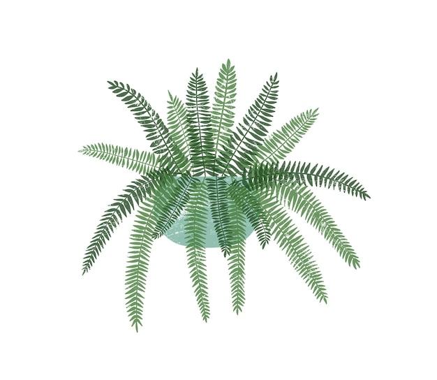 Farn zimmerpflanze in stilvoller keramiktopf flache vektorgrafik. buntes trendiges innendekorationselement. innenblume, exotische tropische topfpflanze lokalisiert auf weißem hintergrund.