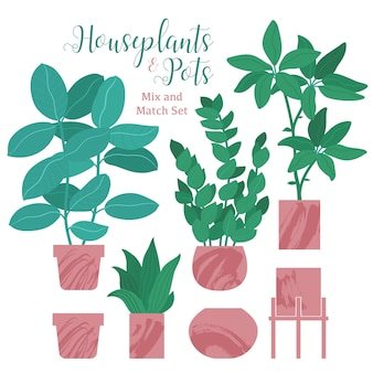 Ficus, monstera, kaktus, zamioculcas pflanzen und verschiedene töpfe