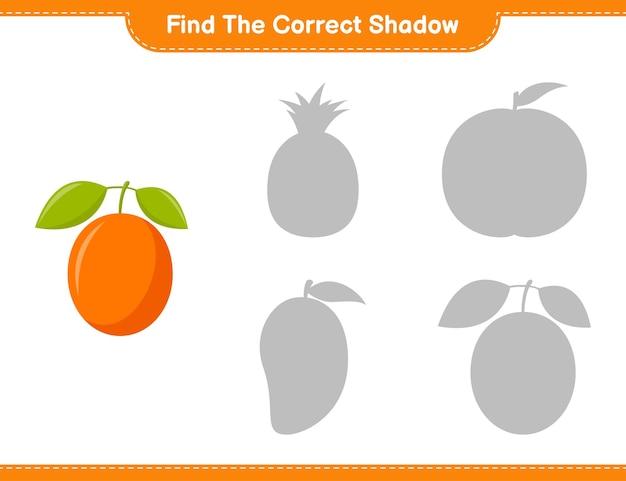 Finde den richtigen schatten. finde und finde den richtigen schatten von ximenia. pädagogisches kinderspiel, druckbares arbeitsblatt