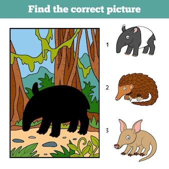 Finden sie das richtige bild, spiel für kinder. malaiischer tapir und hintergrund