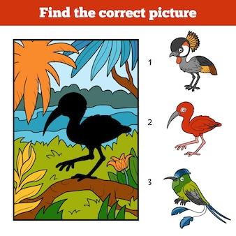 Finden sie das richtige bild, spiel für kinder. scharlachroter ibis und hintergrund