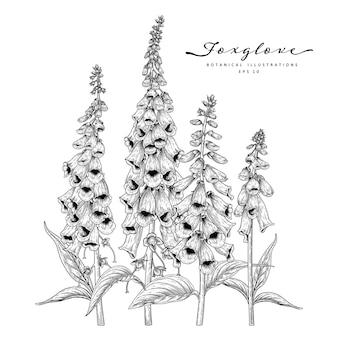 Fingerhutblumenzeichnungen lokalisiert auf weiß