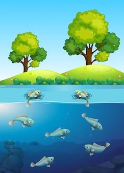 Fisch im fluss