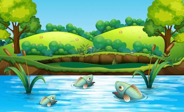 Fischen sie im teich