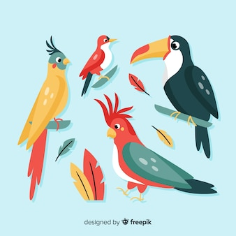 Flache art der exotischen vogelsammlung