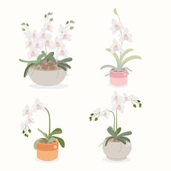Flache art der weißen orchideenblumentopfpflanzensammlung lokalisiert auf weiß