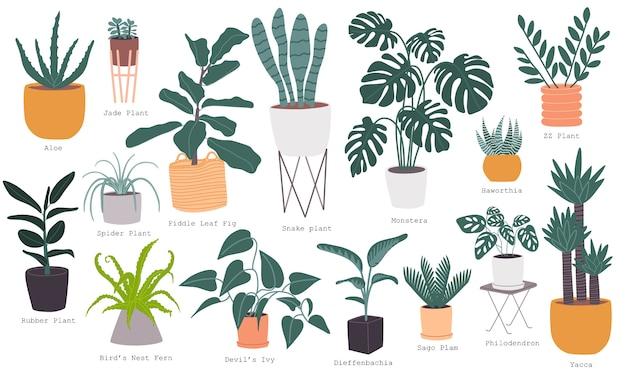 Flache artvektorillustrationssatz der populärsten zimmerpflanzen-sammlung mit namen.