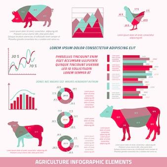 Flache gestaltungselemente landwirtschaft infographics von viehhühnerkuhschweinschafen und von diagrammvektorillustration