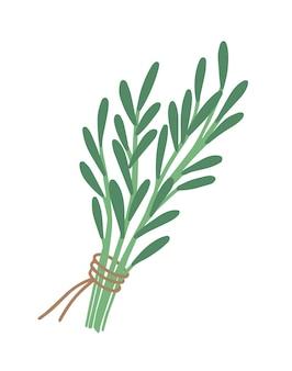 Flache illustration des grünen rosmarinzweigs gebunden mit einem auf weiß isolierten band