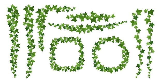 Flache illustrationen der grünen efeurahmen. grenzen von immergrünen kletterholzpflanzen