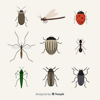 Flache insektenpackung