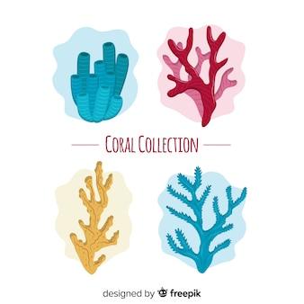Flache korallensammlung