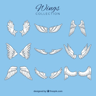 Flache sammlung mit verschiedenen arten von flügeln