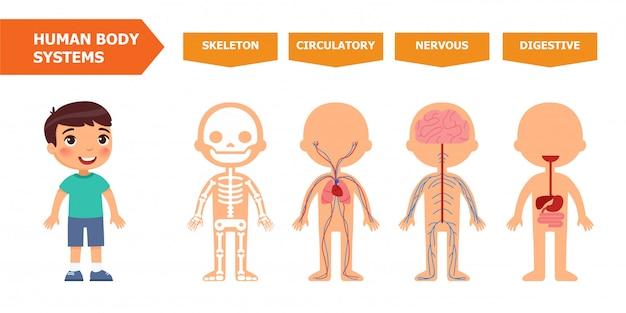 Flache schablone der pädagogischen kinderfahne der systeme des menschlichen körpers.