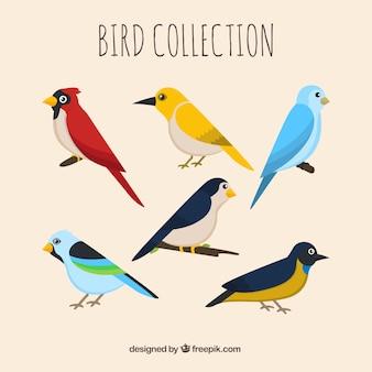 Flache vogelsammlung