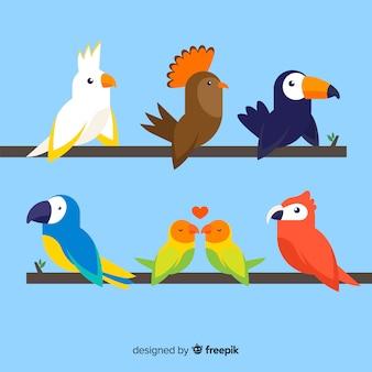 Flaches design der bunten exotischen vogelsammlung