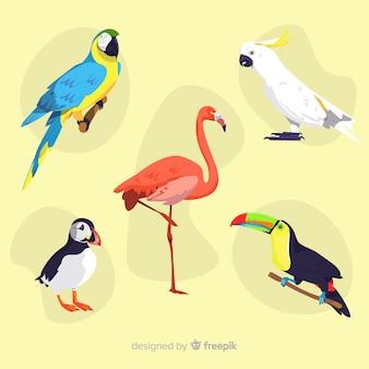 Flaches design der exotischen vogelsammlung