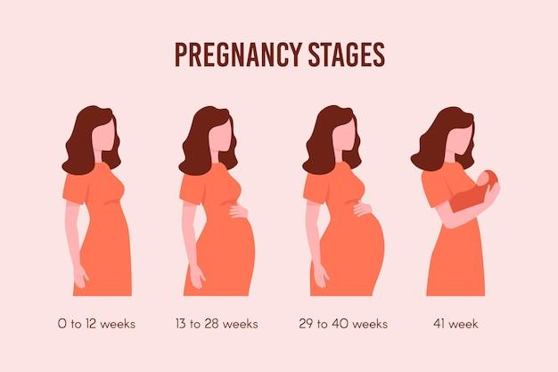 Flaches design schwangerschaftsstadien pack
