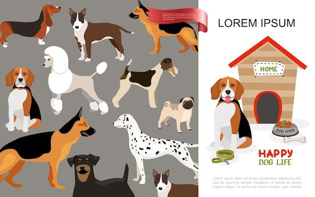 Flaches glückliches hundelebenkonzept mit verschiedenen hunderassen und beagle, die nahe zwingerschale der nahrungsknochenleine sitzen sitzen