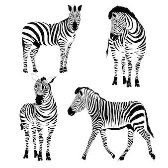 Flaches zebraporträt für karte, plakat, einladung, buch, plakat, anmerkungsbuch, skizzenbuch.