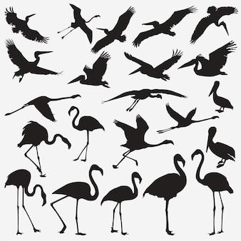 Flamingo-pelikan-silhouetten
