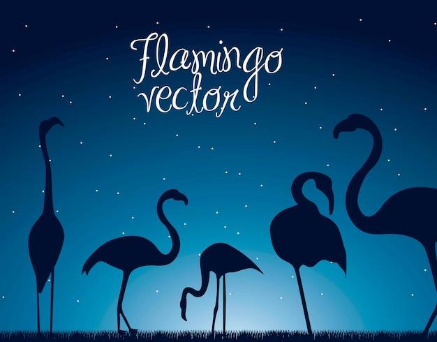 Flamingo über nachthintergrund tiervektorillustration