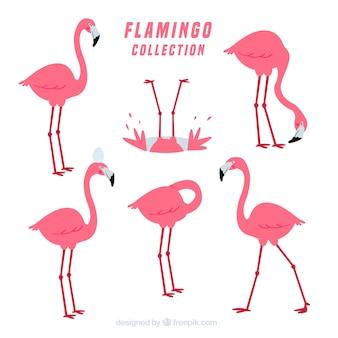 Flamingos-kollektion mit verschiedenen haltungen im flachen stil