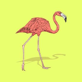 Flamingovogelillustration, zeichnung, gravur