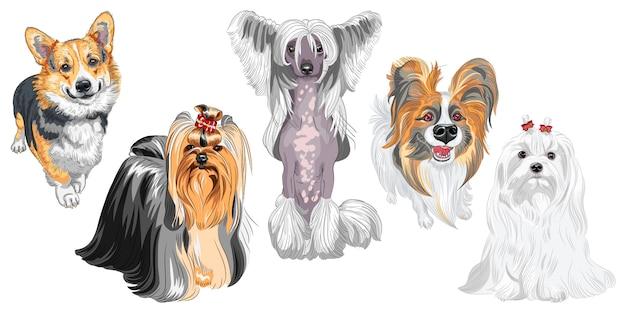 Flauschige hunde verschiedener rassen