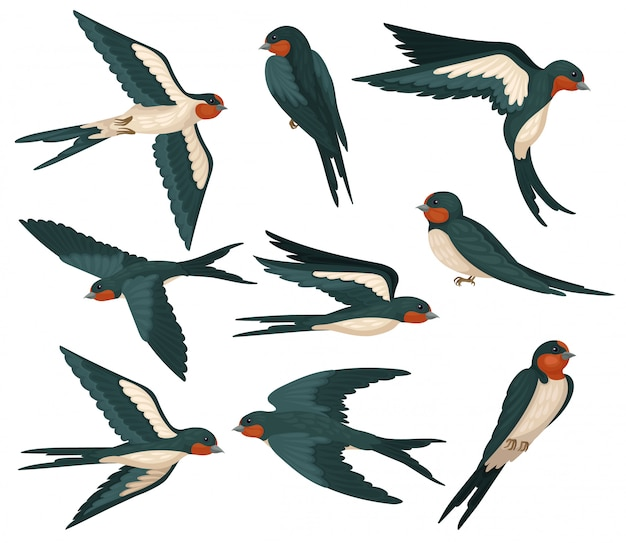 Fliegende schwalbenvögel in verschiedenen ansichten eingestellt, vogelschwarm mit farbigem gefieder illustration auf einem weißen hintergrund