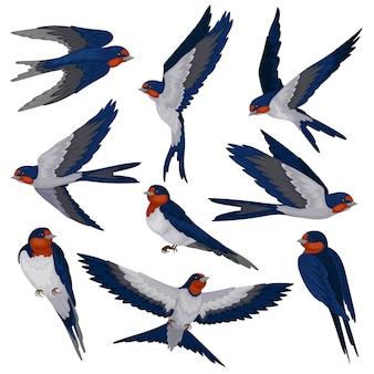 Fliegende schwalbenvögel in verschiedenen ansichten eingestellt, vogelschwarmillustration auf einem weißen hintergrund