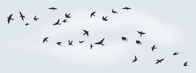 Fliegende vögel silhouette. schwarm schwarzer seevögel, tauben, möwen oder schwalben zur dekoration, einzeln schwarz auf weißem hintergrund. vektorfreiheitskonzept