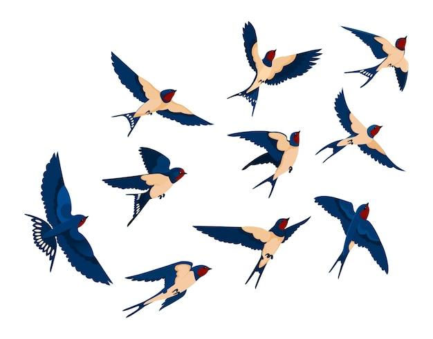 Fliegende vogel verschiedene ansicht sammlungssatz. schwalbenschwarm lokalisiert auf weißem hintergrund. karikaturillustration