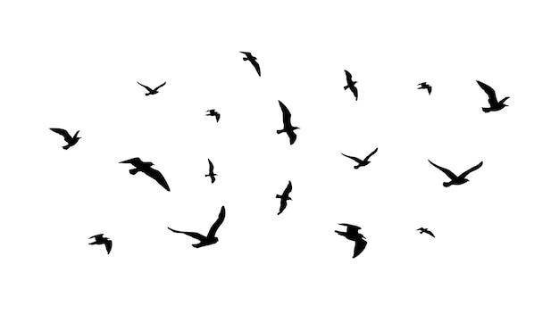 Fliegender vogelschwarm. flugvogelsilhouetten, isolierte schwarze tauben oder möwensammlung