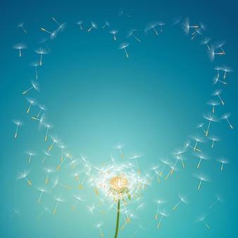 Fliegenfallschirme vom löwenzahn, der liebesblumenrahmenhintergrund bildet