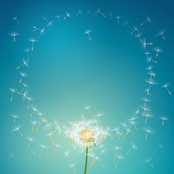 Fliegenfallschirme vom löwenzahn, der runden blumenrahmenhintergrund bildet