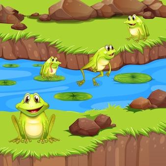 Flogs leben im flussteich