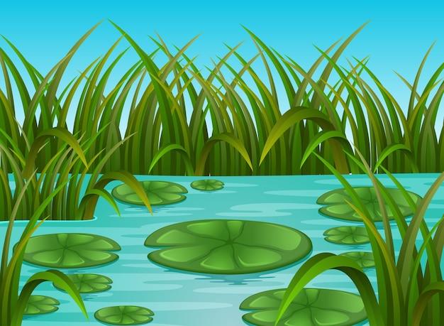 Flussszene und seerose in einer schönen natur
