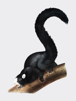 Fox-Eichhörnchenillustration