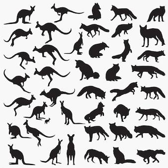Fox känguru-silhouetten