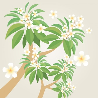 Frangipaniblume