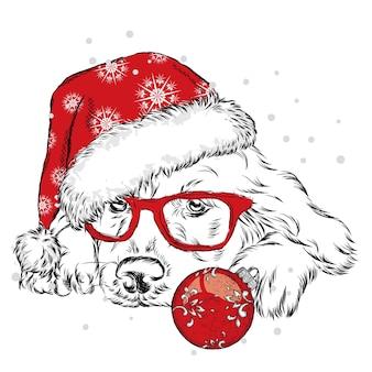 Französische bulldogge im winterhut. neujahr und weihnachten.