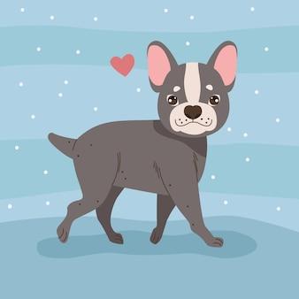 Französische bulldogge mit herz