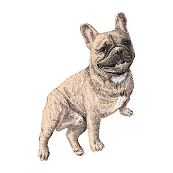 Französische bulldogge, sitzend. hand gezeichnete haustier-tier-skizze. bunte illustration