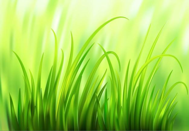 Frash spring grünes gras hintergrund. illustration