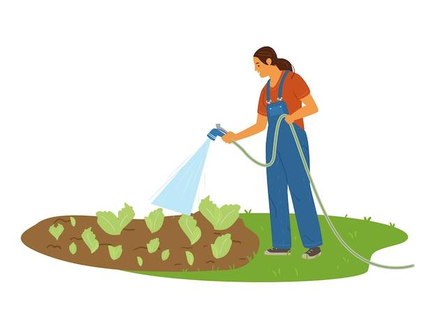 Frau landwirt, der salatplantage mit einer schlauchillustration wässert.