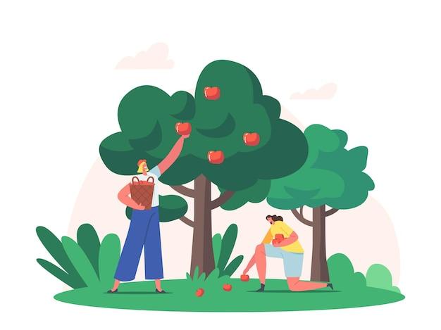 Frauen, die früchte im garten ernten. bauern pflücken äpfel in den korb. gärtnerinnen sammeln reife äpfel vom baum