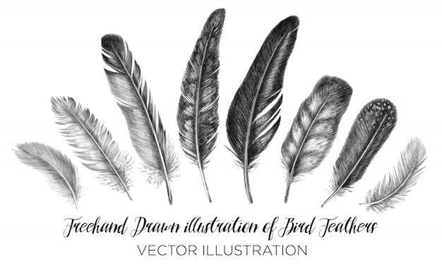 Freihand-feder. stammesillustration von federn. isoliert auf weißem hintergrund im grafikstil.