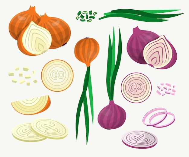 Frische gelbe und rote zwiebeln illustrationen set