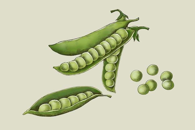 Frische grüne bio-erbsen
